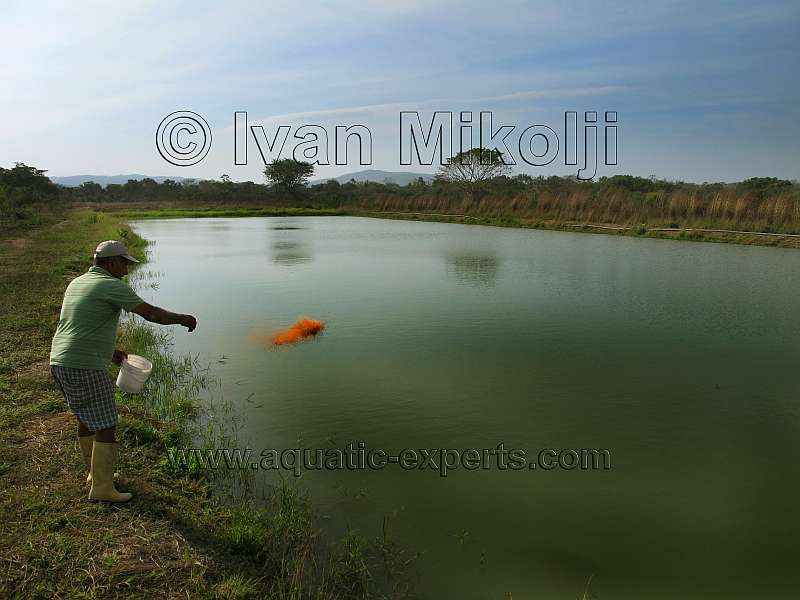 Granjas acuaticas for Peces para criadero