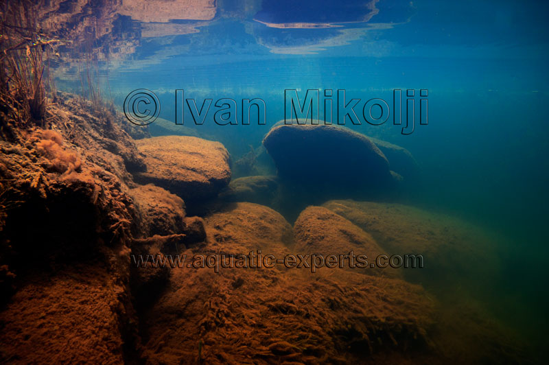 african cichlid aquarium background