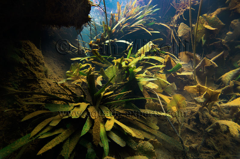 amazon habitat aquarium background pictures