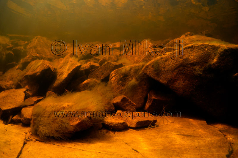blackwater amazon biotope aquarium background