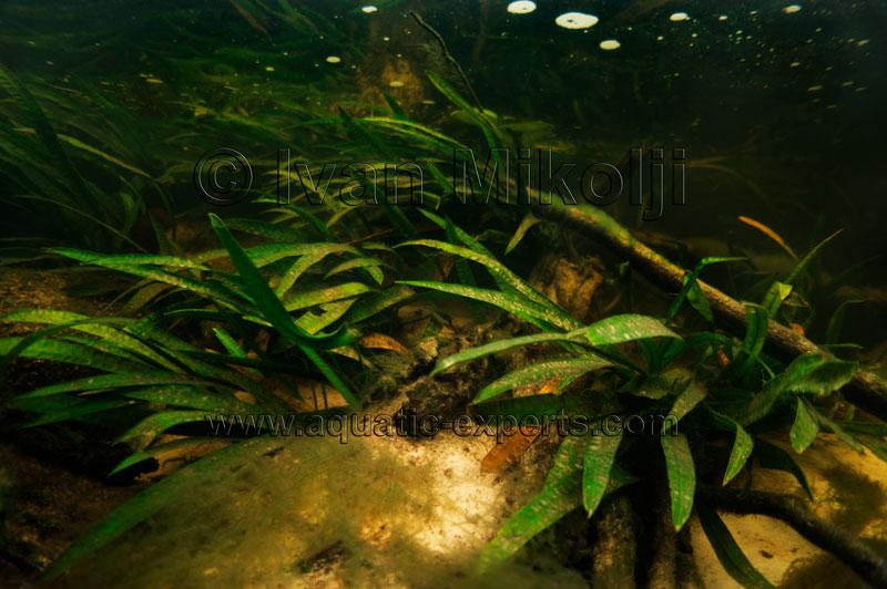 Aquarium backgrounds for Amazon aquarium fish