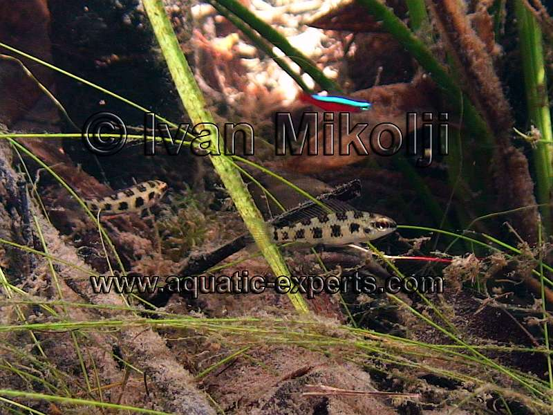 underwater freshwater images