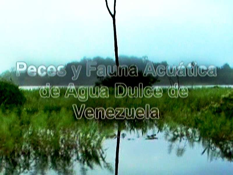 documental peces de venezuela