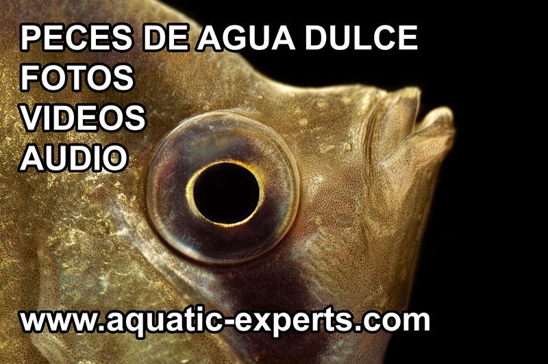 aquatic freshwater fish